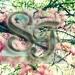 Sweet Fantasies 75x7510