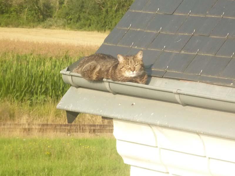 Ce chat me cherche... - Page 2 P1090812