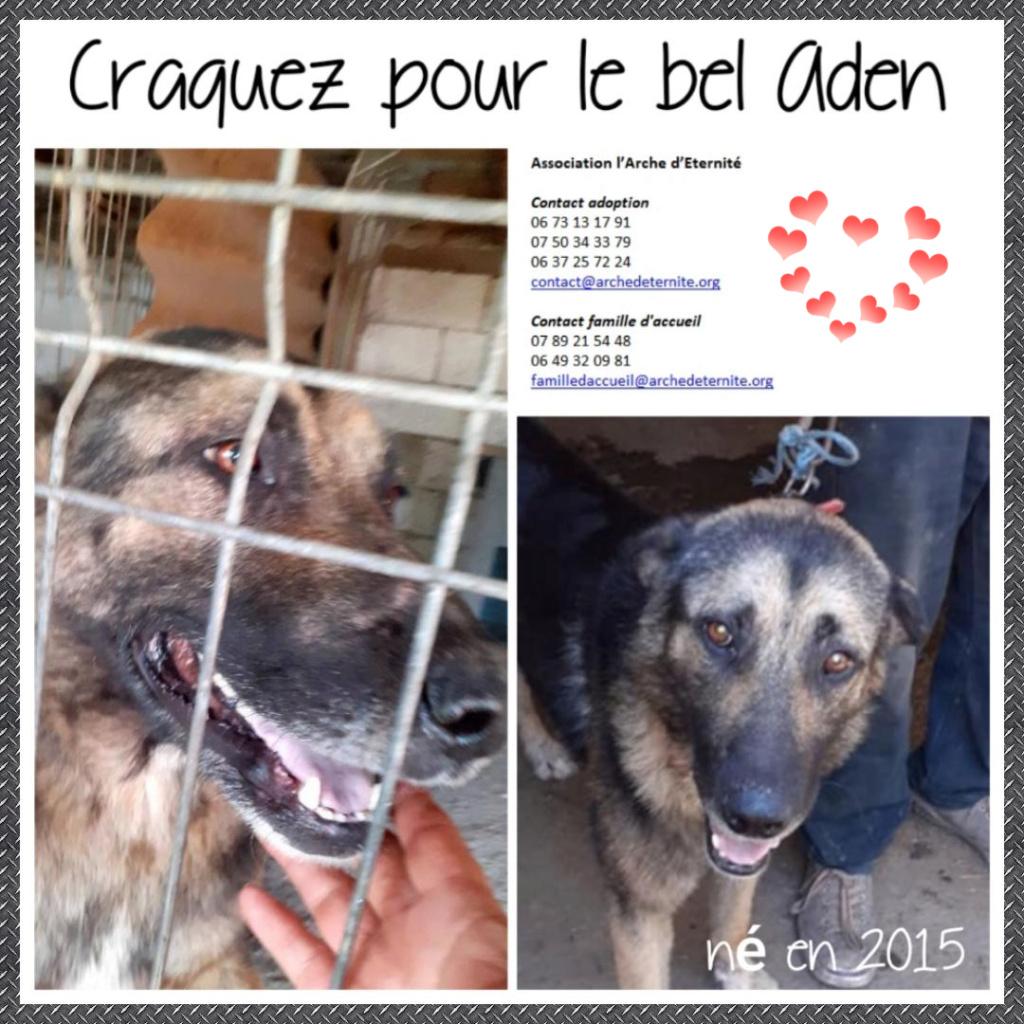 aden - ADEN, né en 2015 ,  trouvé attaché à la grille du refuge-R-SC-SOS Aden11