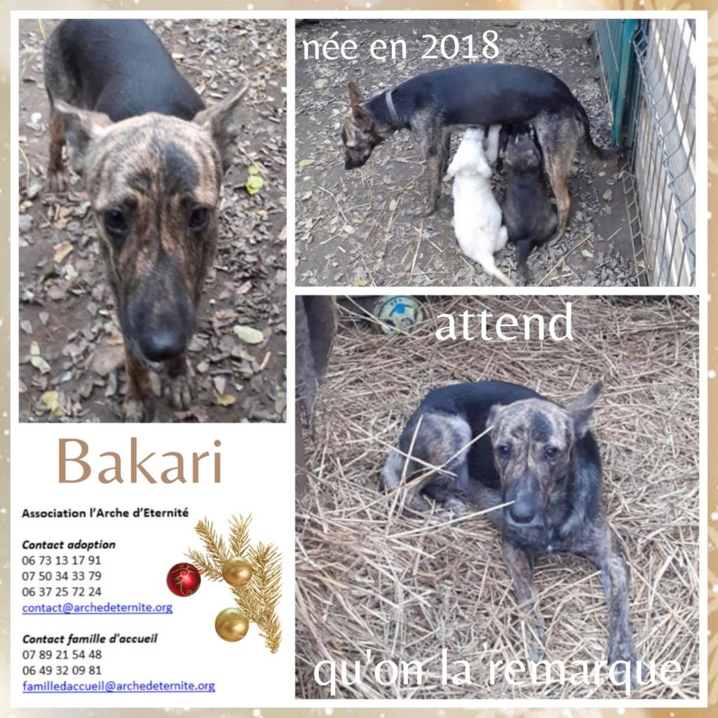 bakari - BAKARI femelle  née en 2018 NR 14014 et ses 3 chiots sauvés de Pallady  le 18/11/2020 - Parrainée par gandalf60350-R-SOS-SC- Bakai10