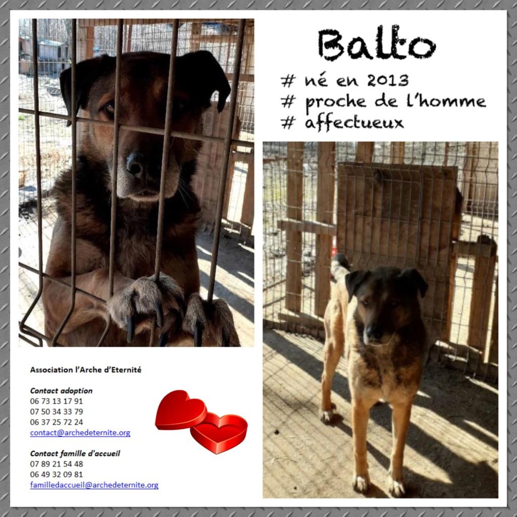 BALTO, mâle sorti de l'équarrissage né en 2013-R- marrainé par Nathalie G-R-SC-SOS Balto211