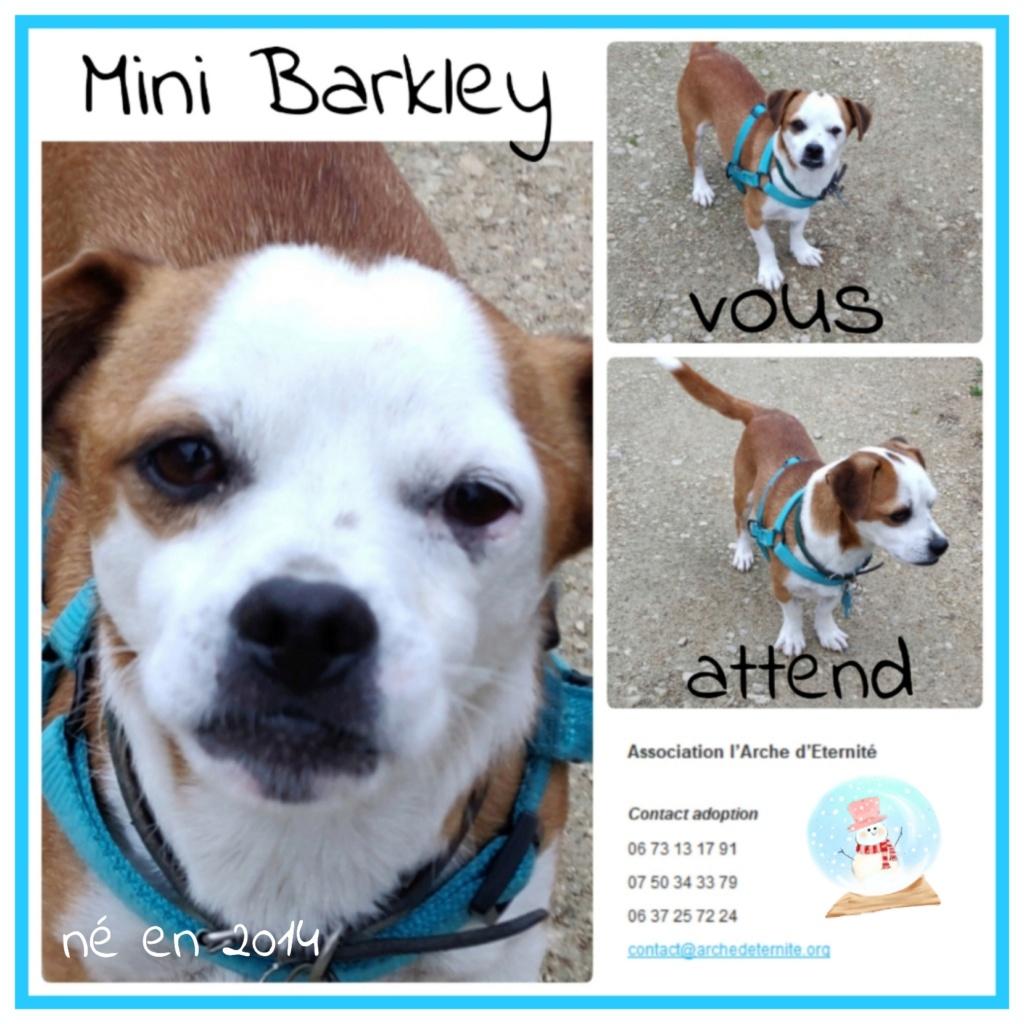barkley - BARKLEY (petit gabarit) né en 2014, sorti de l'équarrissage le 20/08/2020 -(Dept45)-SC-R-SOS Barkle17