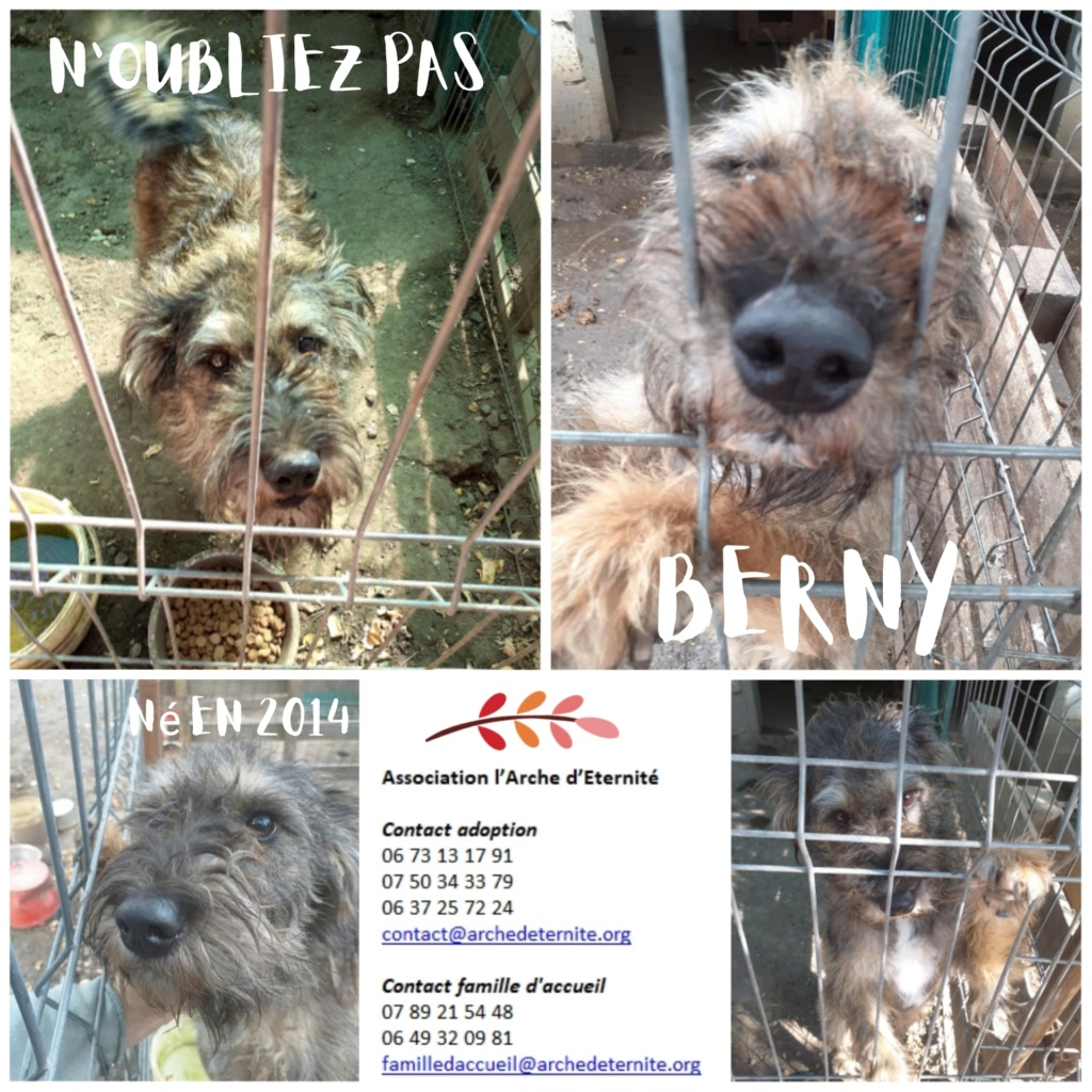 BERNY,  mâle né le 10/02/2014 - Marrainé par Rostagnat - GAGE COEUR Florence B. R-SC-SOS Berny_10