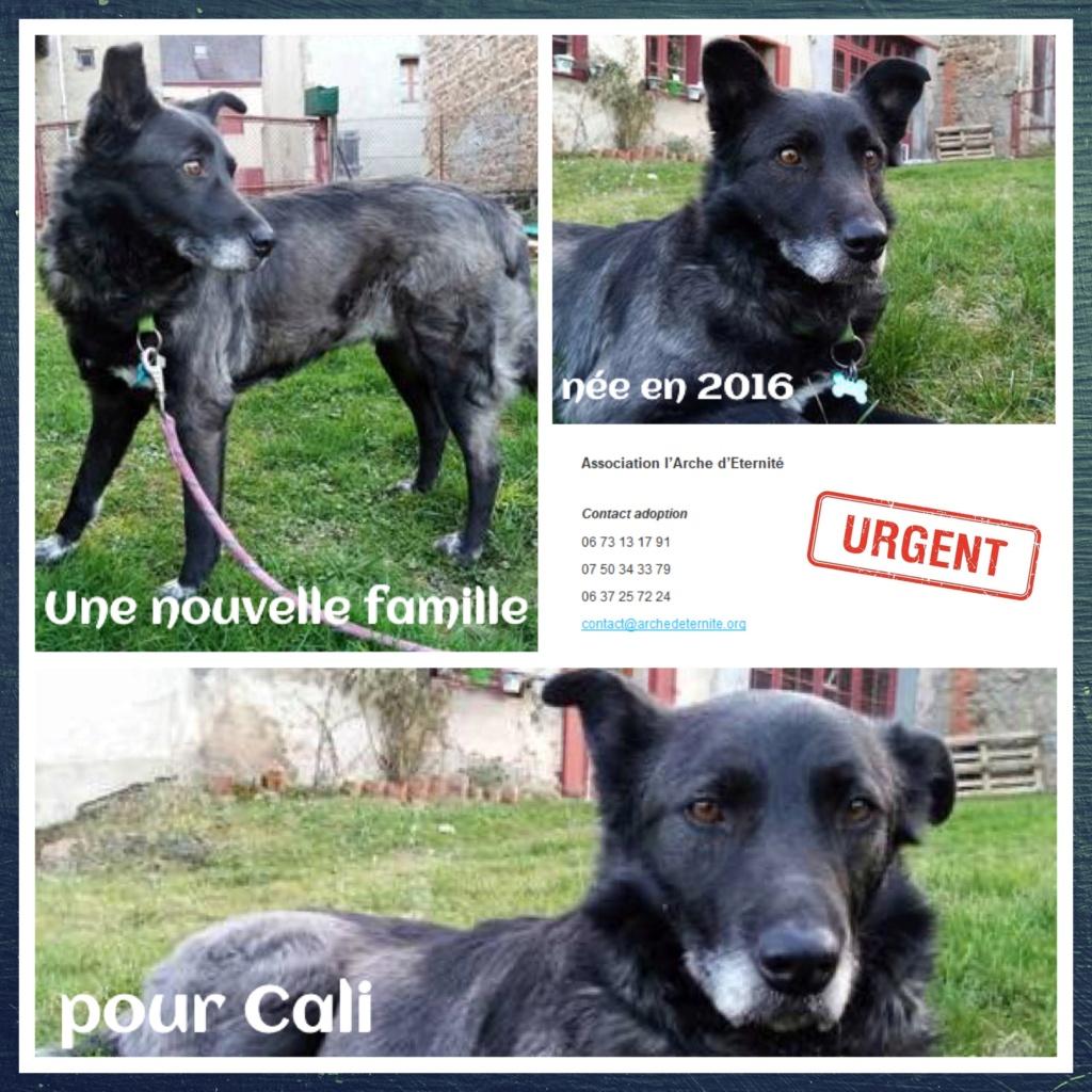 cali - CALI , née LE 15/04/2016 - taille moyenne - En FA dans le 60 - parrainée par Jean Jacques Ev. -R-SC-SOS-30MA- Cali211