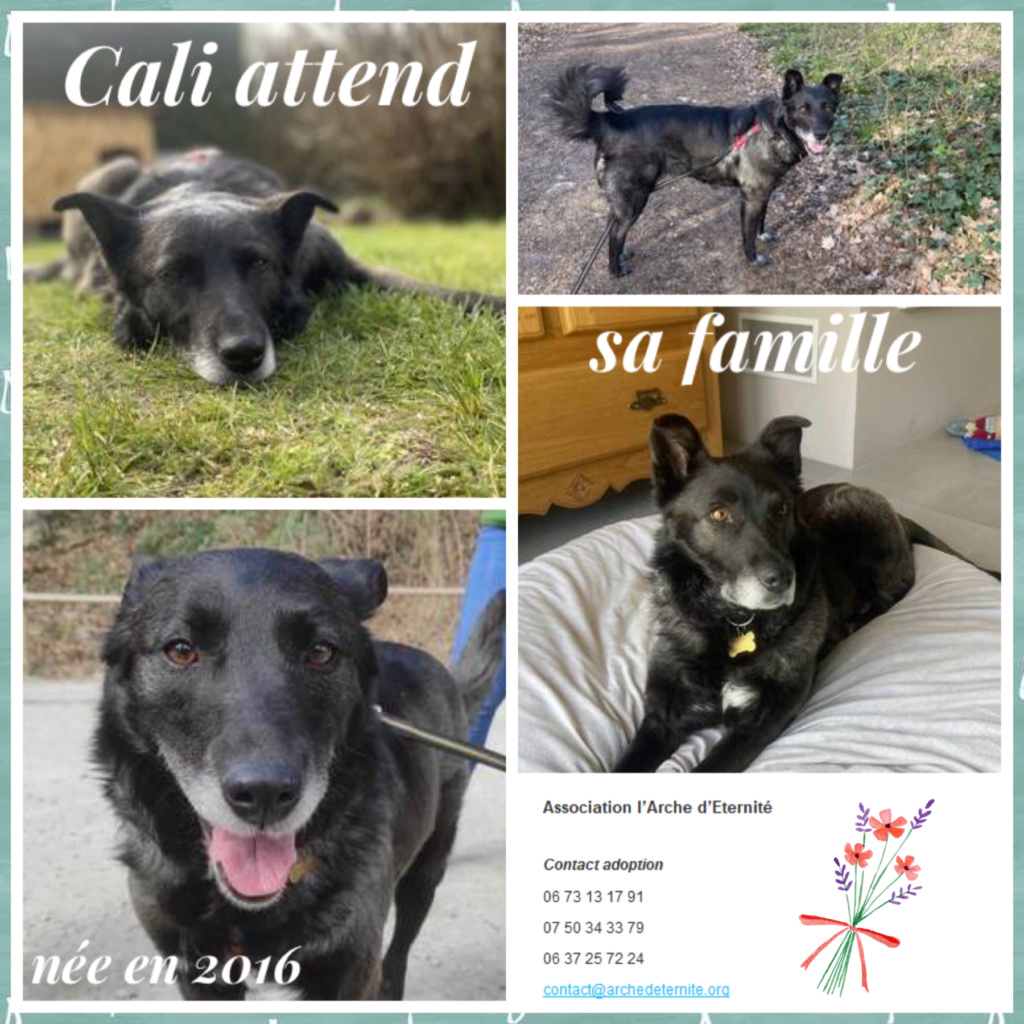 cali - CALI , née LE 15/04/2016 - taille moyenne - En FA dans le 60 - parrainée par Jean Jacques Ev. -R-SC-SOS-30MA- Cali410