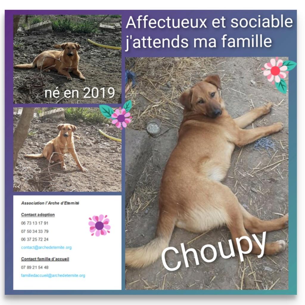 choupy - CHOUPY mâle né en Juin 2019 portée de 5 trouvés par Lénuta en septembre 2019- marrainé par Réglisse -R- Choupi10