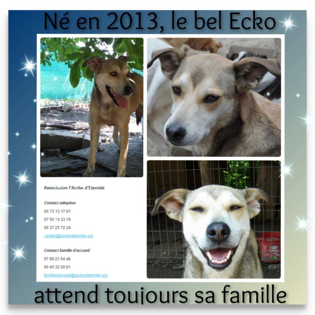 ECKO, mâle, né en Février 2016, équarrissage de PALLADY - parrainé par Nelly69-SOS-SC-R- Echo11