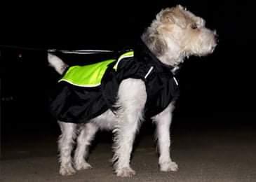 Manteau pour chien : Illume Nite Neon  Fb_img11