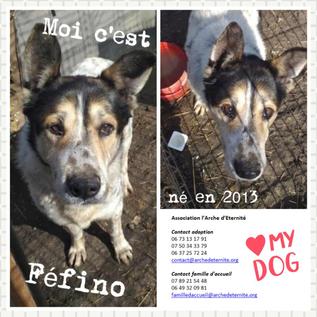 FÉFINO, né  en 2013 - Sorti de Mihailesti le 25 février - parrainé par Mimaoinikebou2021-R-SC-SOS Fefino10