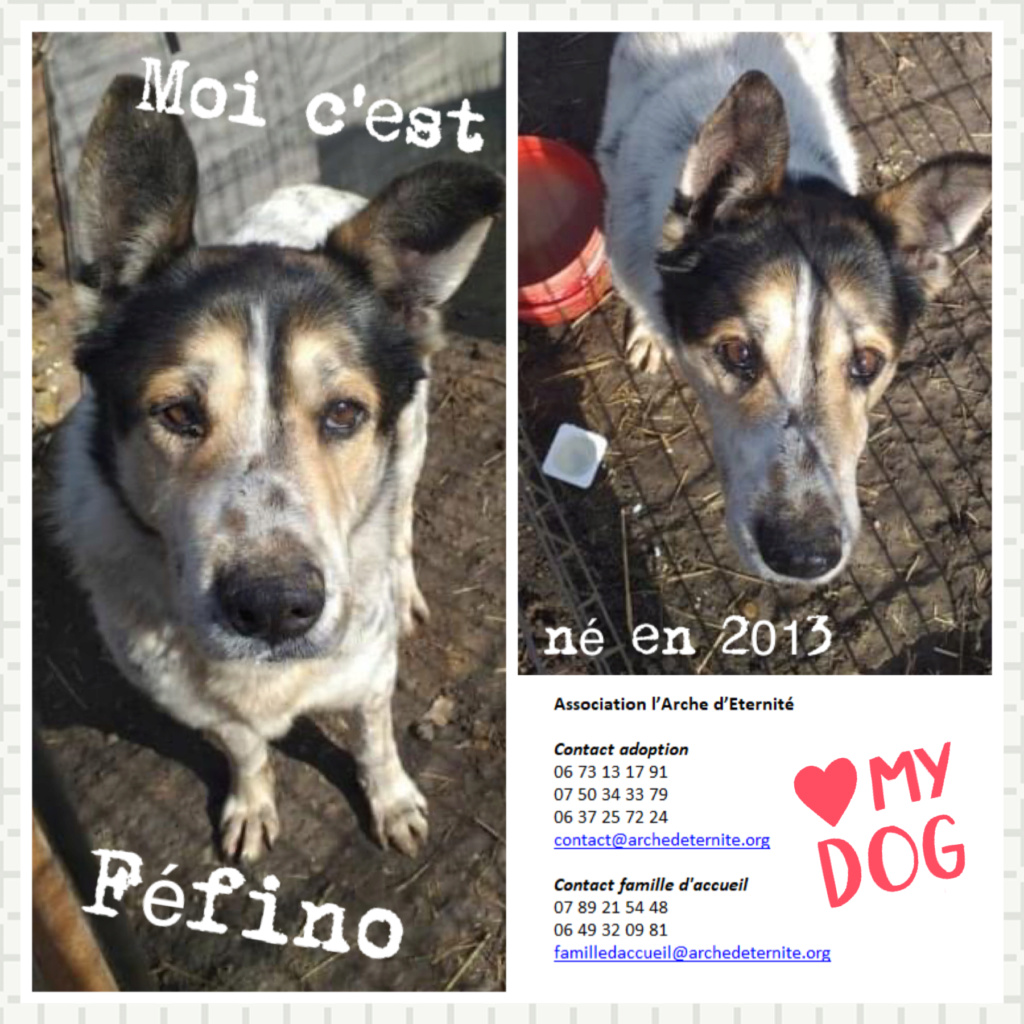 FÉFINO, né  en 2013 - Sorti de Mihailesti le 25 février - parrainé par Mimaoinikebou2021-R-SC-SOS Fefino11