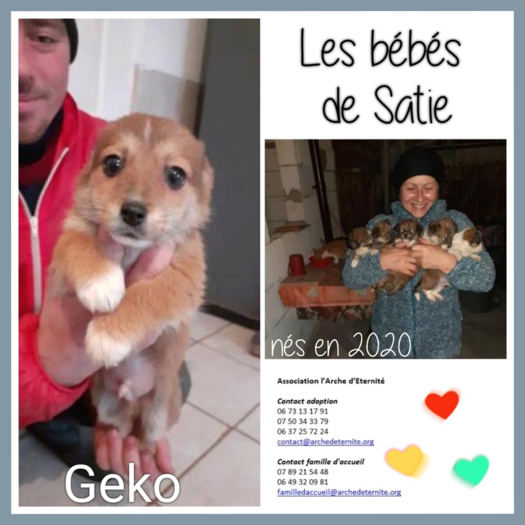 Affiches faites par Marion - Page 3 Geko11