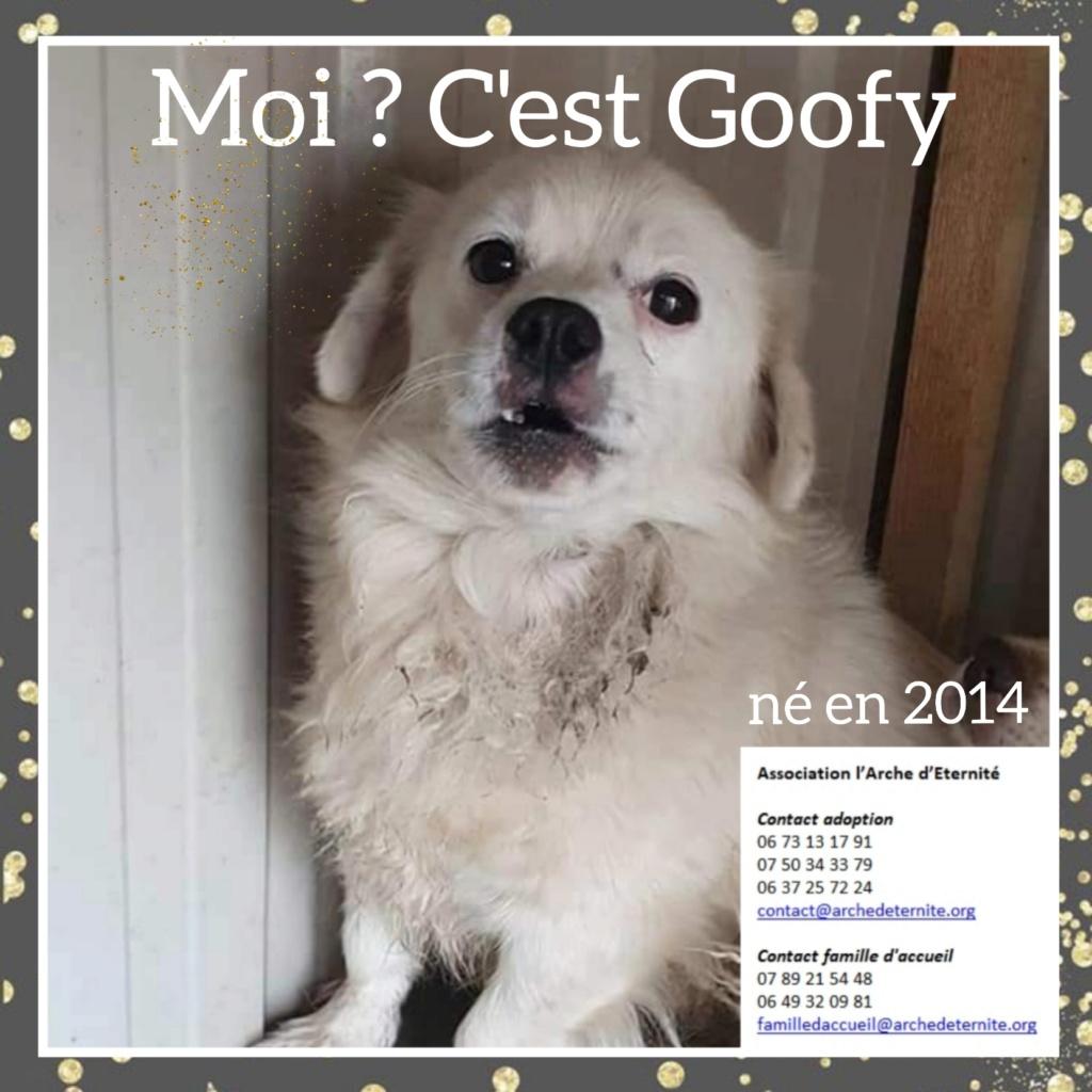 Affiches faites par Marion - Page 2 Goofy10