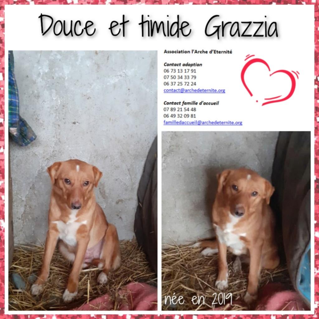 GRAZZIA - femelle née en 2019 - Trouvée errante dans le champs en face du refuge en Décembre 2020-R- Grazzi10