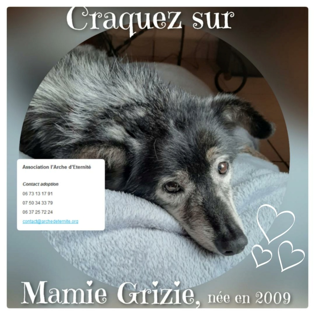 grizie - GRIZIE - Taille moyenne - Femelle née le 10/08/2009 EN FA DANS LE 28 - Marrainée par Sabfly -R-SC- SOS Grizie13