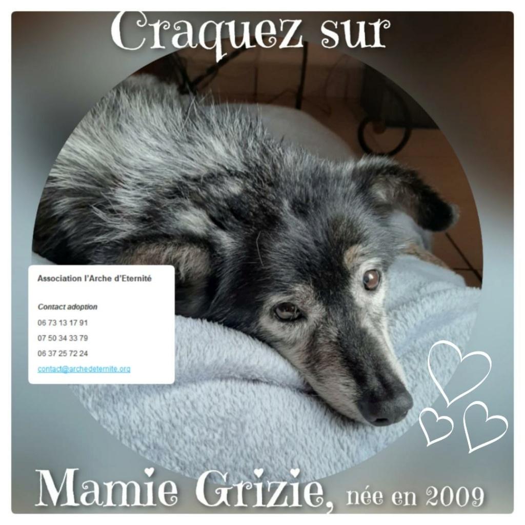 GRIZIE - Taille moyenne - Femelle née le 10/08/2009 EN FA DANS LE 28 - Marrainée par Sabfly -R-SC- SOS - Page 2 Grizie14