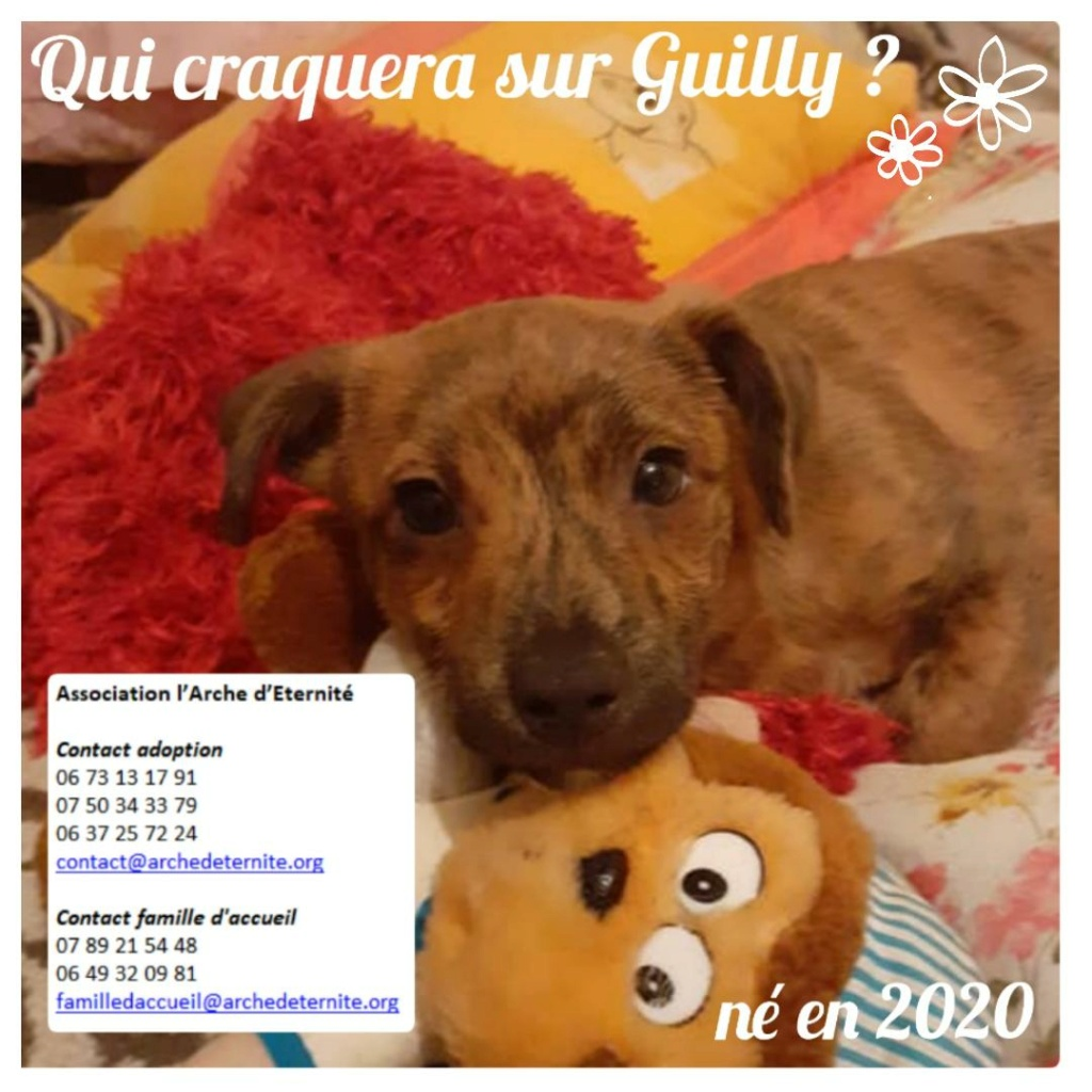 GUILLY mâle né en Septembre 2020, sauvé de Pallady le 18/11/2020-R-SC-SOS Guilly10