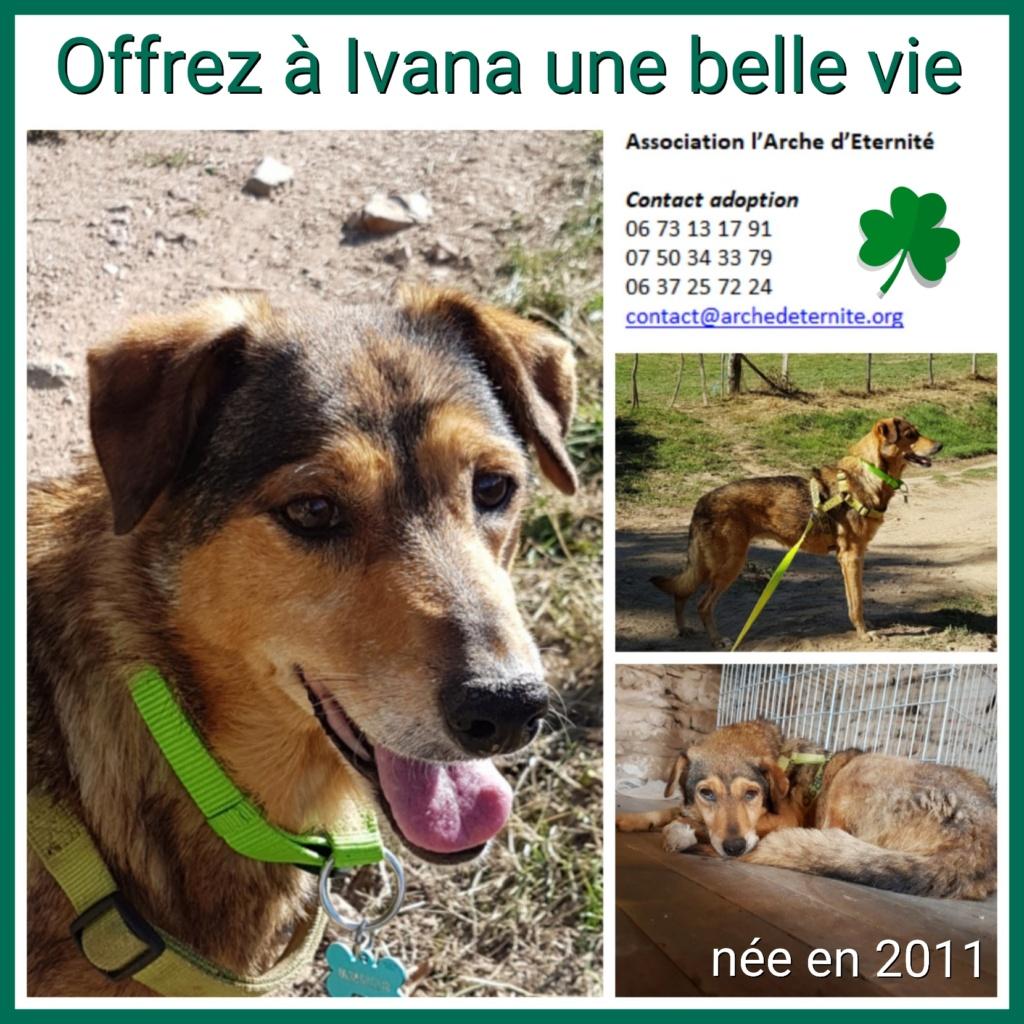 IVANA -Taille Moyenne- née en 2012 - EN FA DANS LE 03- marrainée par Nathalie G. - Gage Coeur VHAK -R-LBC-SOS-SC-30MA Ivana_10