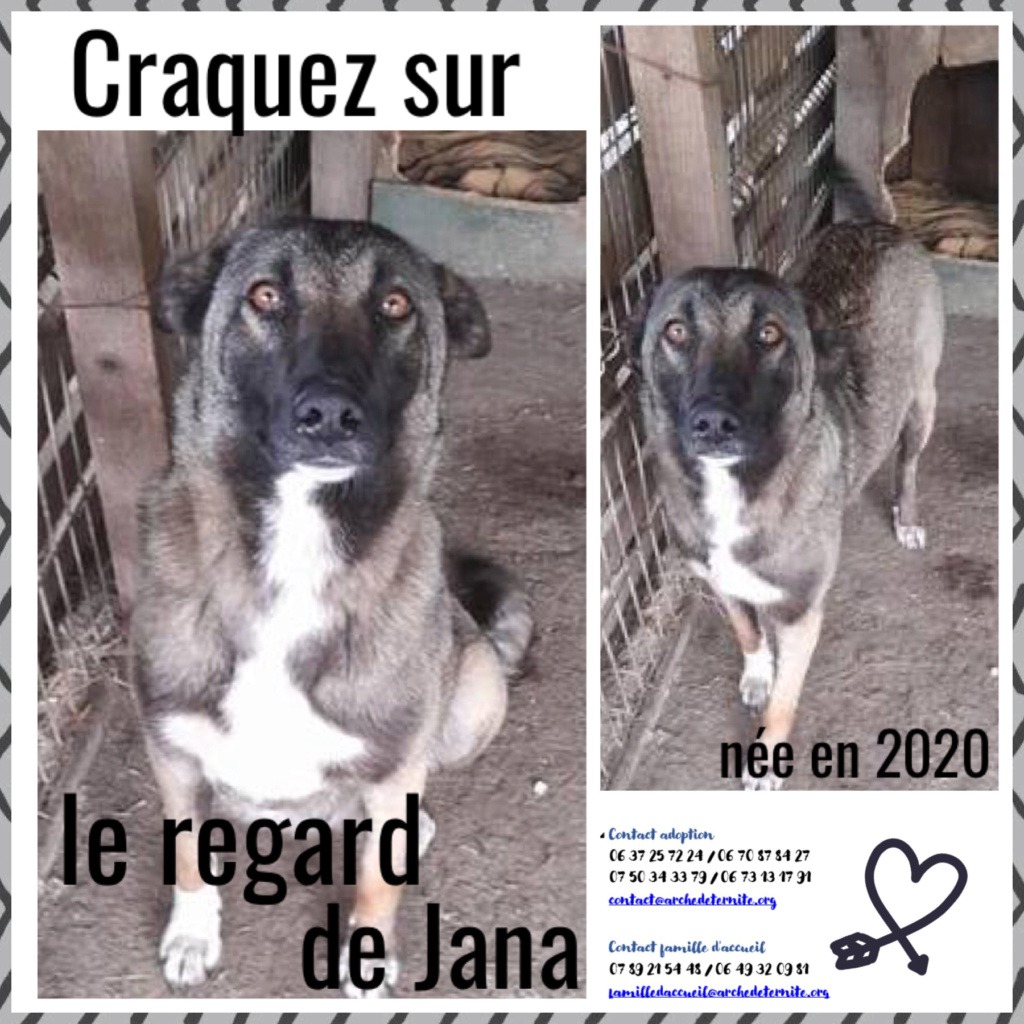 JANA - née en mai 2020 - abandonnée par sa famille- parrainée par FanfounetteR-SC-R Jana12