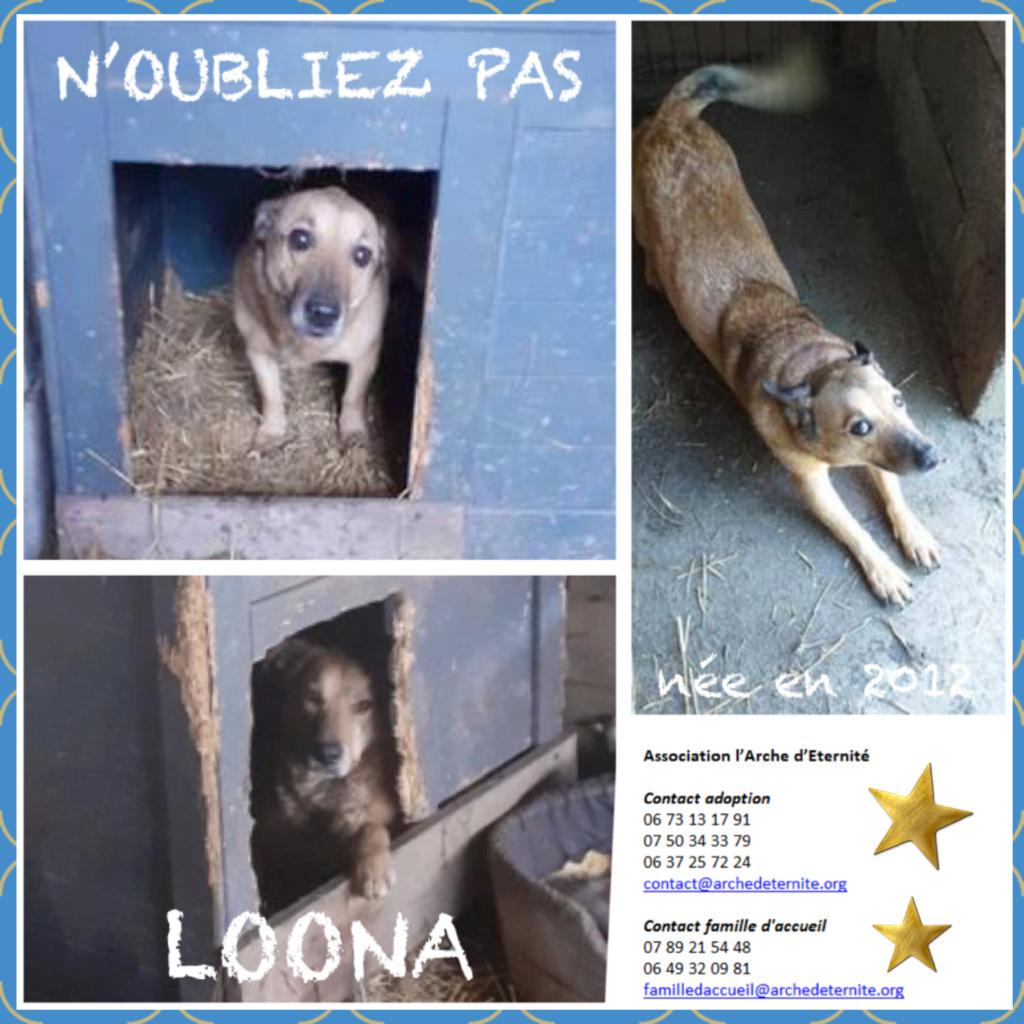 LOONA - femelle née le 09/08/2012, EN FA DANS LE 92 - sortie de l'équarrissage le 08/09/2020 - Parrainée par Sylvie H. SC-SOS-R-30MA- Loona312