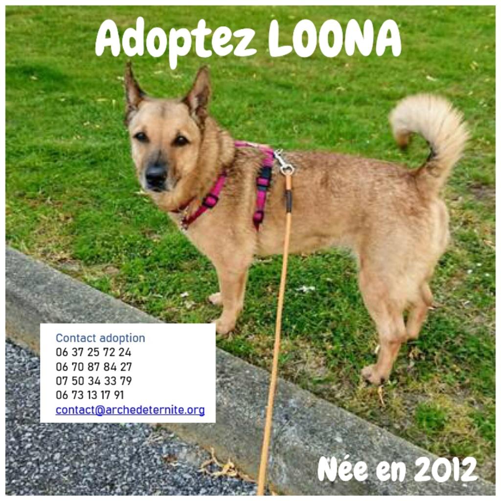 LOONA - femelle née le 09/08/2012, EN FA DANS LE 92 - sortie de l'équarrissage le 08/09/2020 - Parrainée par Sylvie H. SC-SOS-R-30MA- Loona410