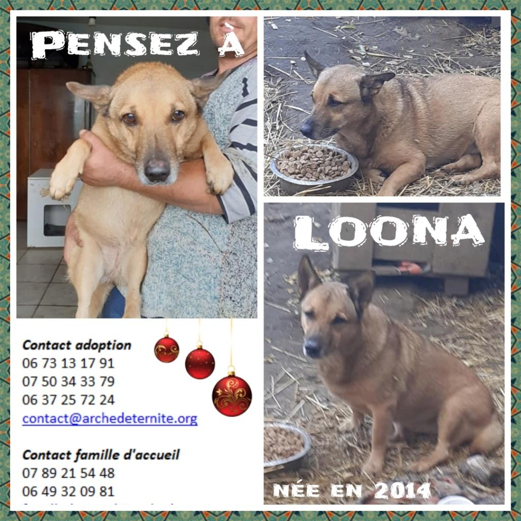 loona - Loona -femelle né en 2014, sortie de l'équarrissage le 08/09/2020 - Parrainée par Sylvie H. SC-SOS-R Loona_10
