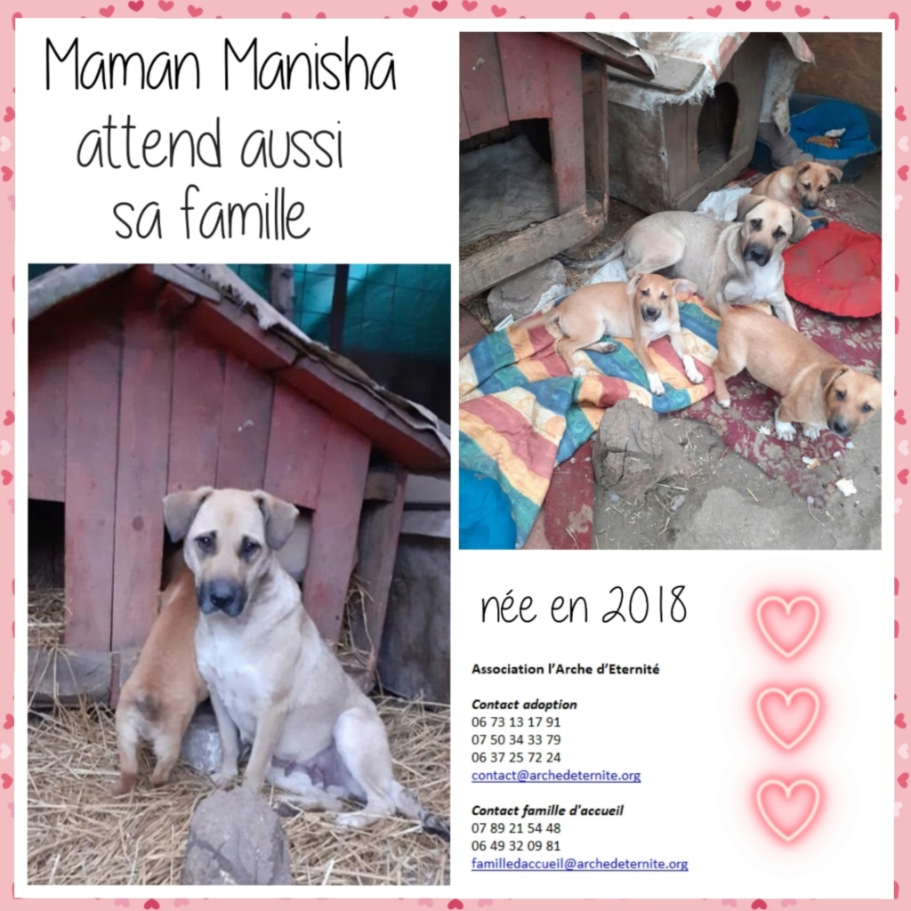 Manisha - MANISHA née en 2018 - maman et ses 3 chiots sauvés de Mihailesti le 20/08/2020 - parrrainée par Coco65-R-SC-SOS Manish12