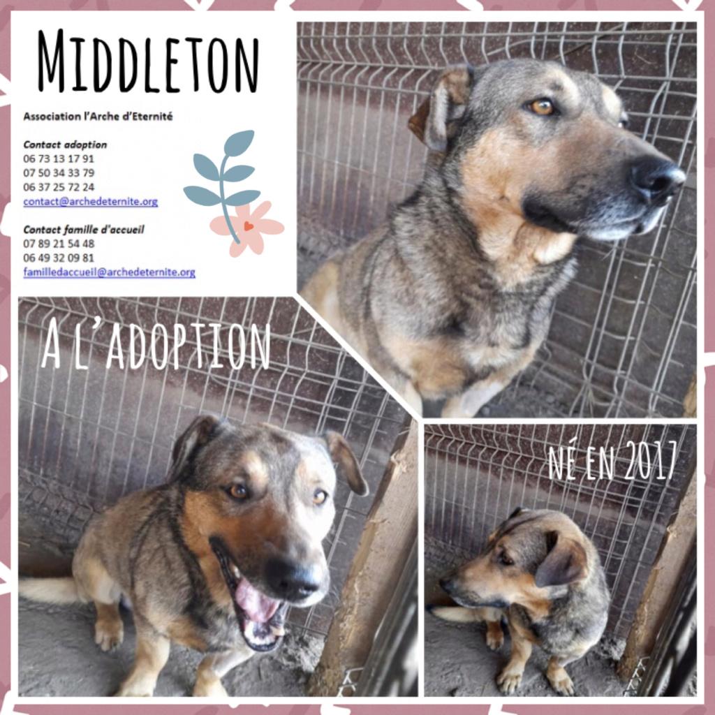 MIDDLETON né en 2017, sorti de l'équarrissage - Parrainé par Chantal01 -R-SC- Middle12