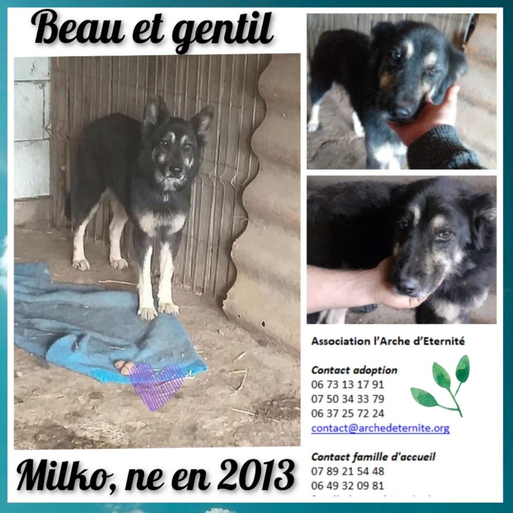 MILKO né en 2013, FAISAIT PARTIE DES 13 VENANT D'UN AUTRE REFUGE- parrainé par Mirko78 -R-SC-SOS- Milko10