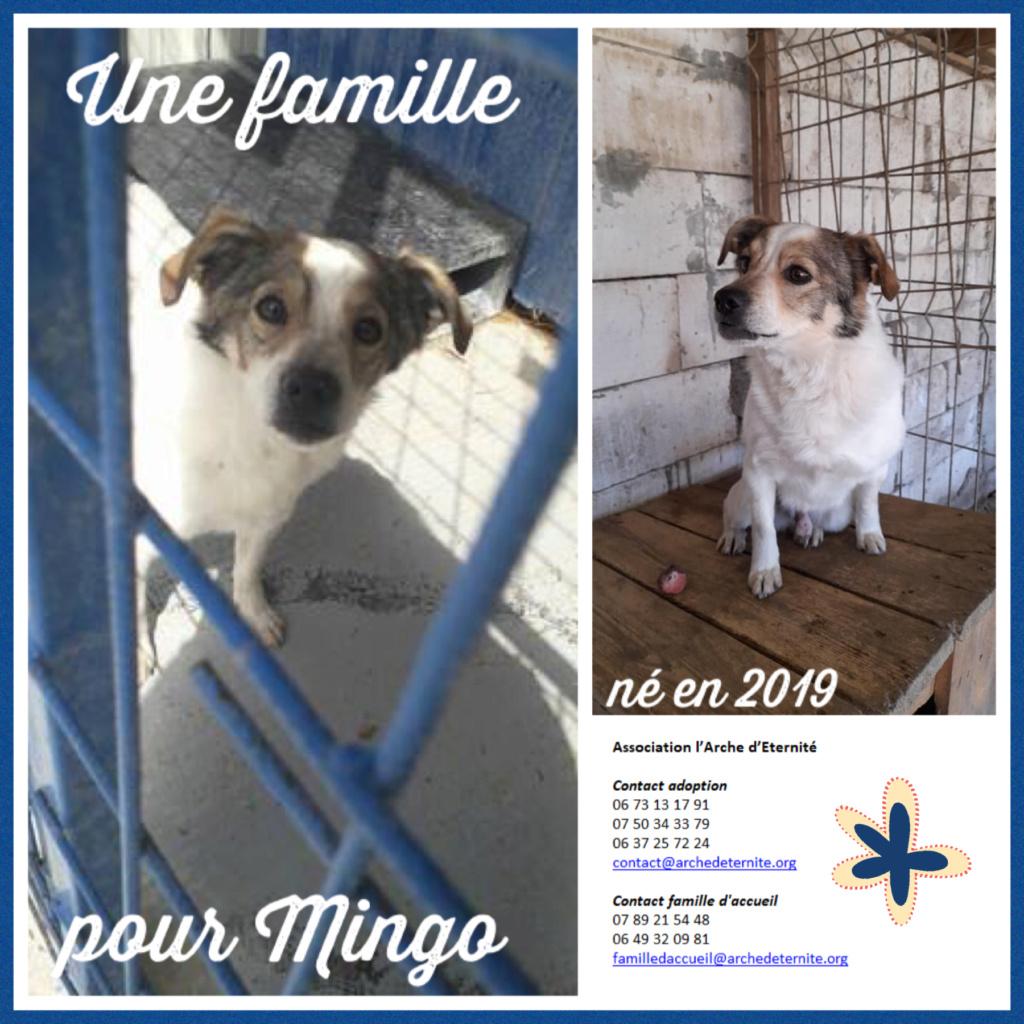 Affiches faites par Marion - Page 4 Mingo12