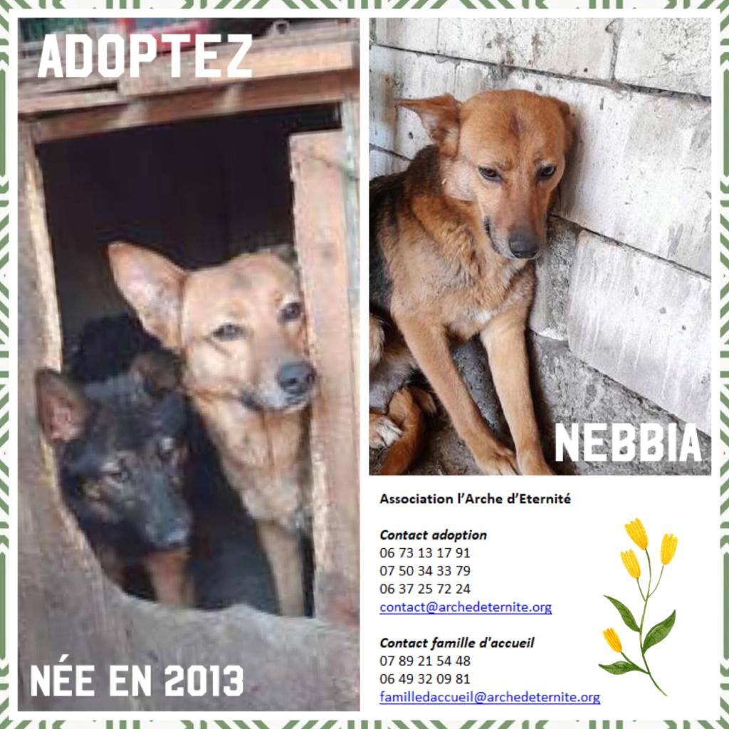 NEBBIA, type berger, née en 2013, récupérée chez un particulier avec sa fille LISSY - parrainée par Mirko78-R-SC Nebbia11
