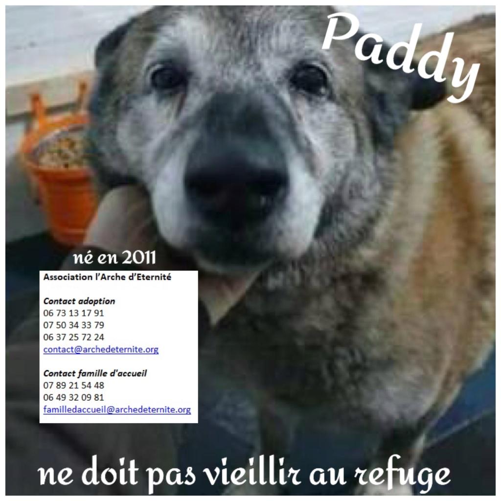 Paddy, né en 2011 - Sorti de Mihailesti le 25 février 2021 - parrainé par Coco65-R-SC-SOS Paddy11
