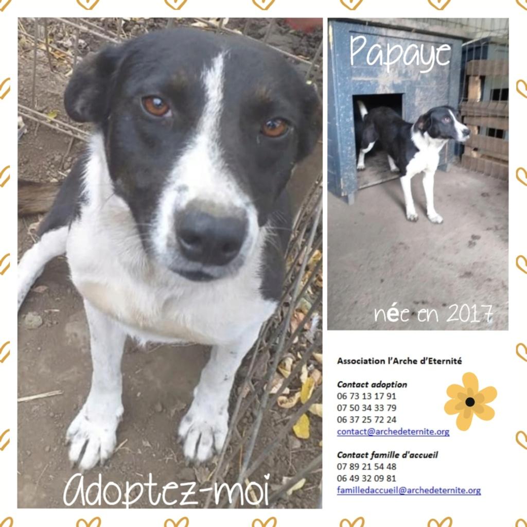 Affiches faites par Marion - Page 3 Papaye11