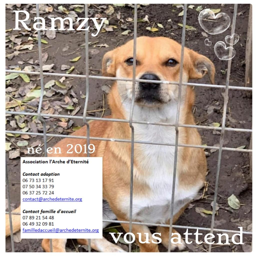ramzy - RAMZY, mâle de petite taille né en 2019, trouvé dans la rue- parrainé par coco65  - R-SOS-SC Ramzy10