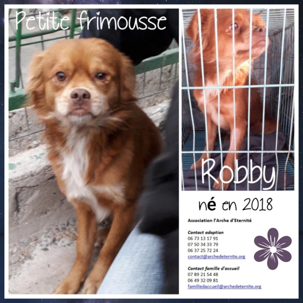 robby - ROBBY, mâle de taille petit/moyen née le 11.05.2018, sorti de l'équarrissage de Bragadiru-R-SC-SOS Robby10