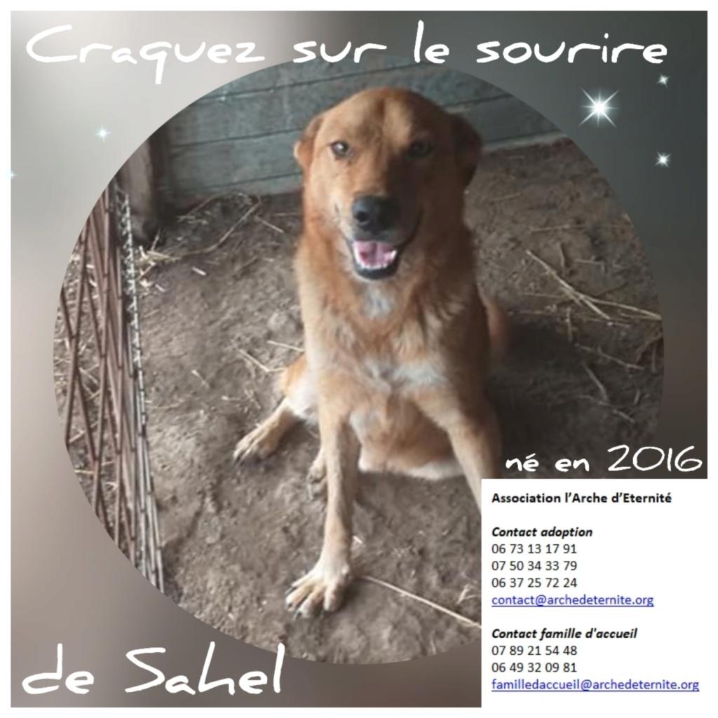 Affiches faites par Marion - Page 3 Sahel11