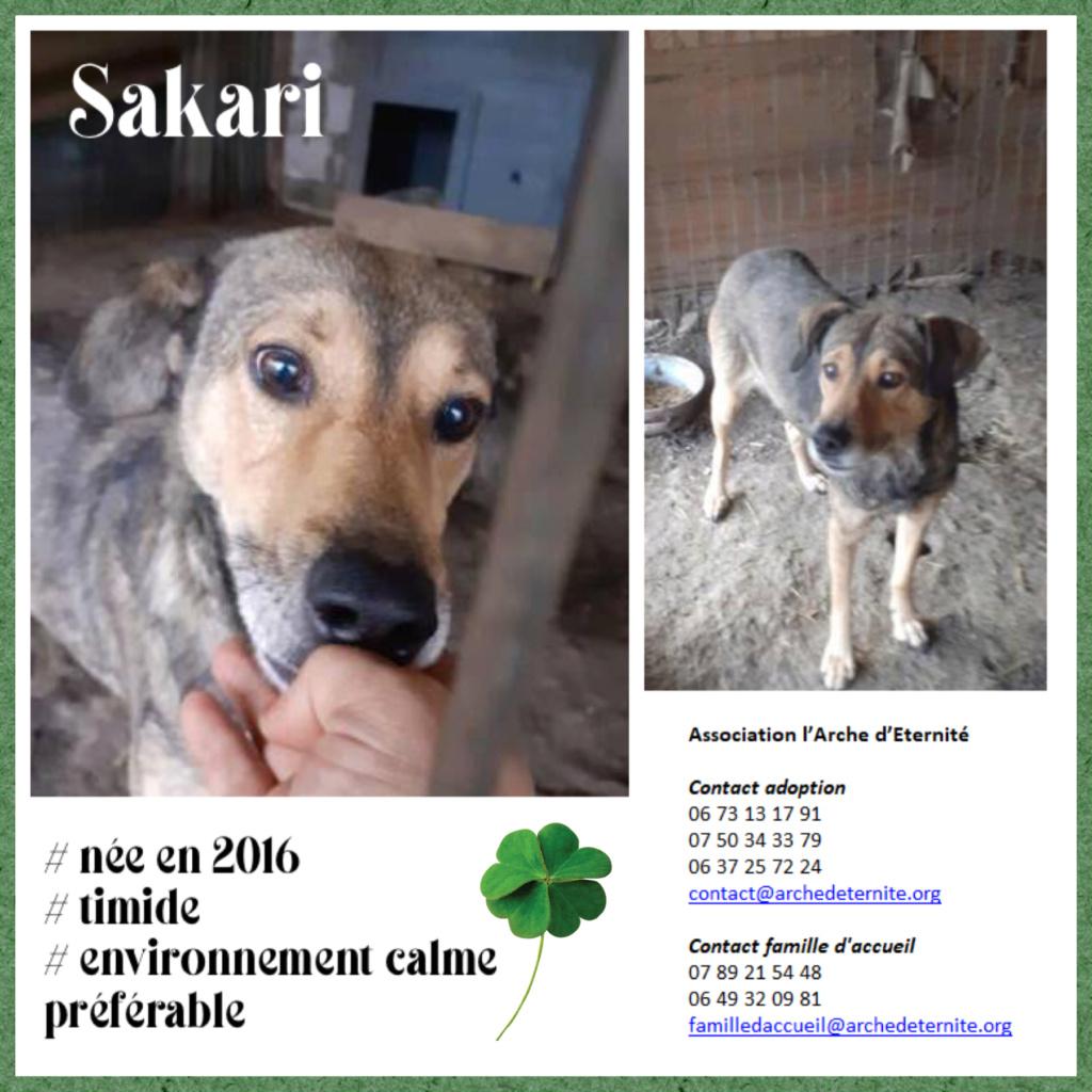 Sakari - SAKARI, femelle née en 2016 -FAISAIT PARTIE DES 13 VENANT D'UN AUTRE REFUGE- Parrainée par Célia78-R-SOS-SC Sakari11