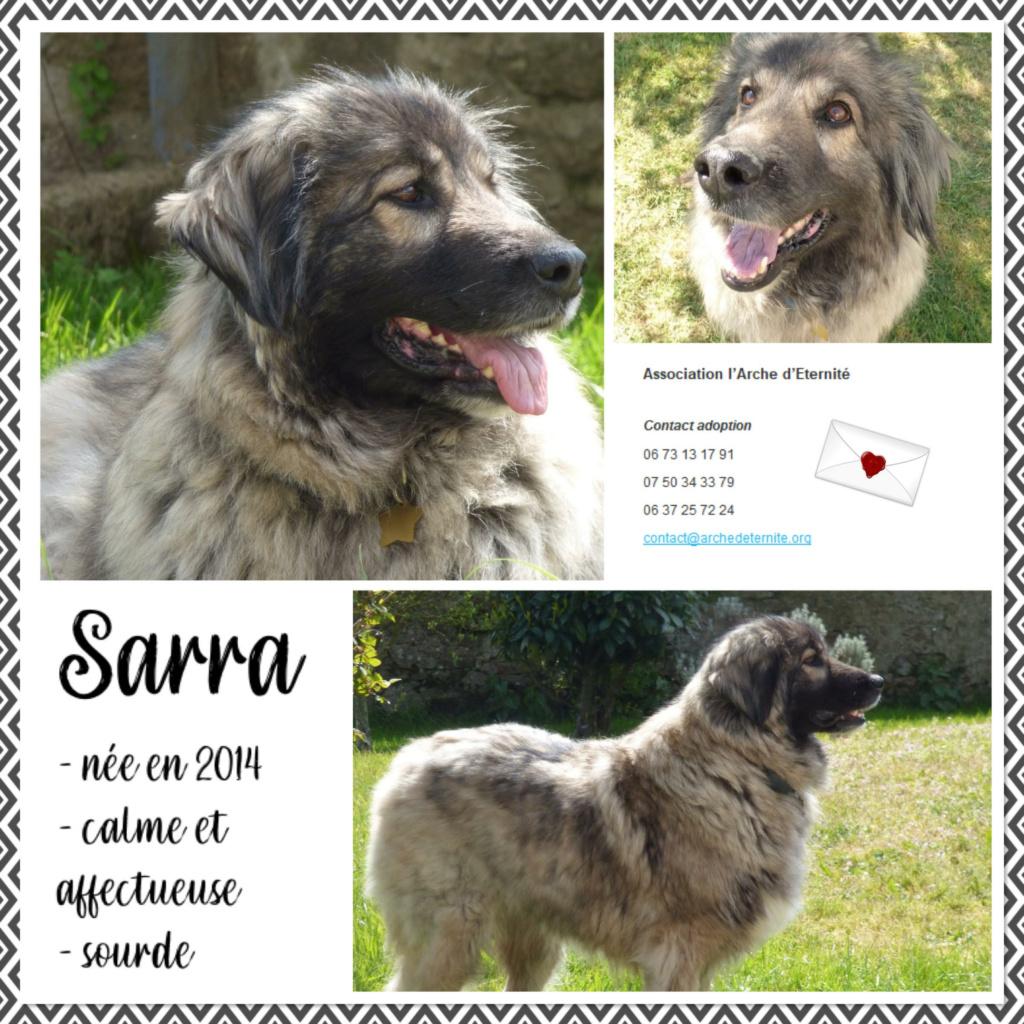 Affiches faites par Marion - Page 4 Sarra412