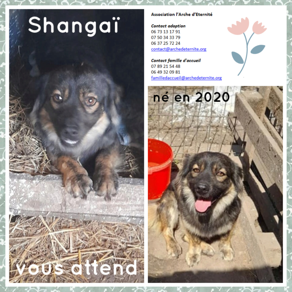 Affiches faites par Marion - Page 4 Shanga14