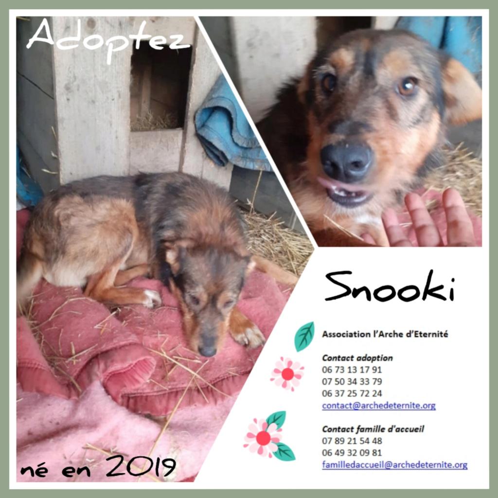 snooki - SNOOKI - mâle - né en 2019, trouvé errant dans le champs en face du refuge en Décembre 2020-R-sSOS-SC Snooki10