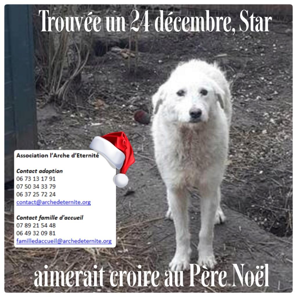 STAR -femelle née en 2018, trouvée le 24 Décembre 2020 devant le refuge - parrainée par amlcte-R-SOS-SC Star10