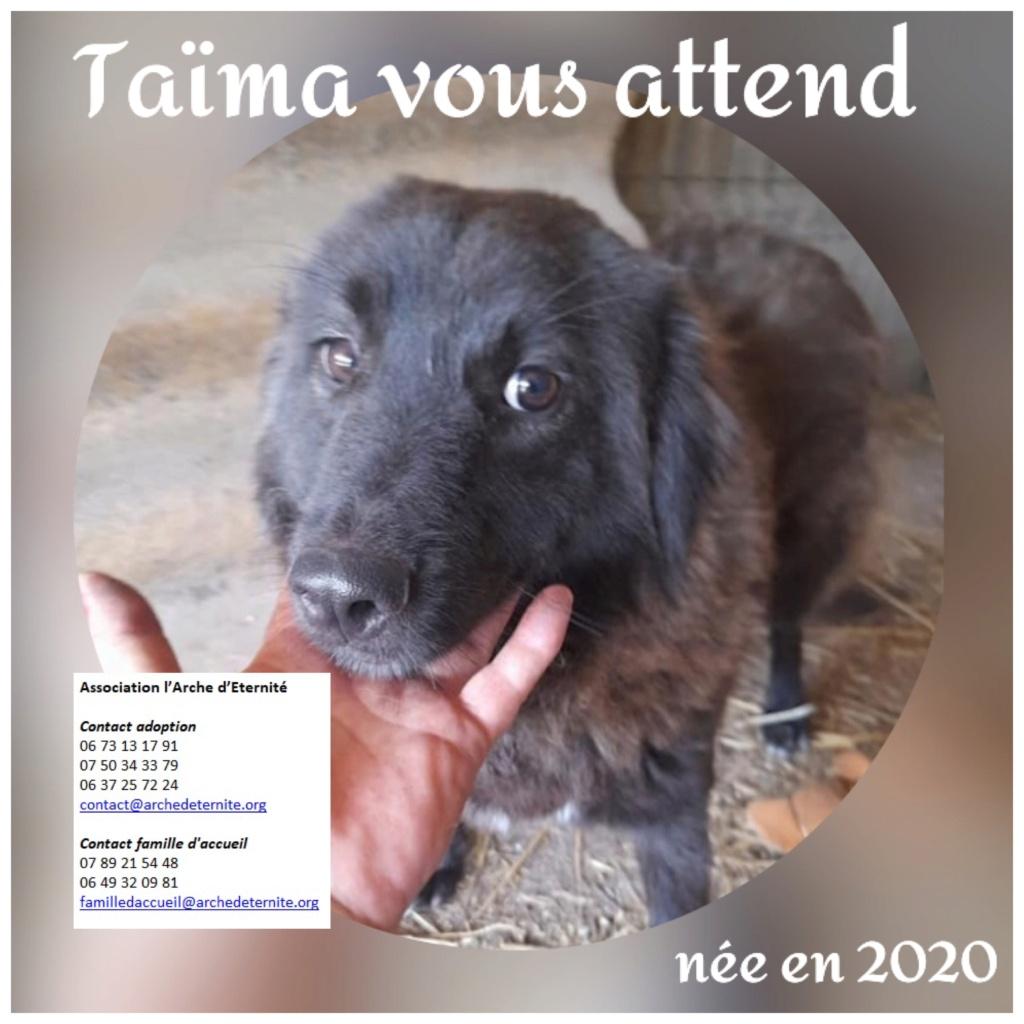 Affiches faites par Marion - Page 4 Taima12