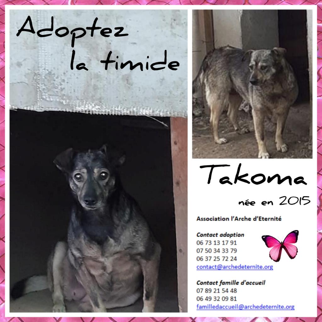 Takoma -femelle née en 2015 - jumelle de Koria  - sortie de l'équarrissage le 11 mars 2017- Marrainée par Skara-SC-SOS Takoma13