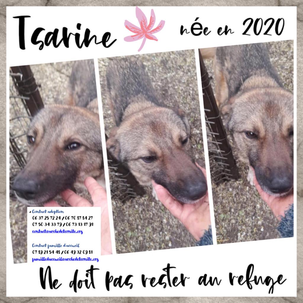 TSARINE, femelle, née en 2020, trouvée blessée au cou le 13/05/2021 - Parrainée par les3loulous-R-SC Tsarin12