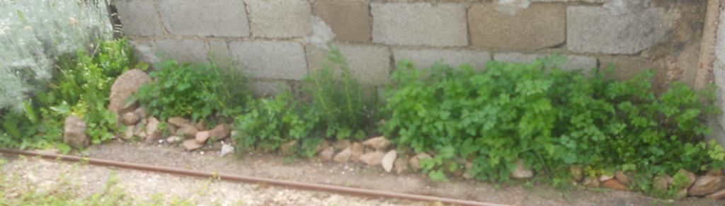 petite sortie au jardin - Page 2 Dscn0060