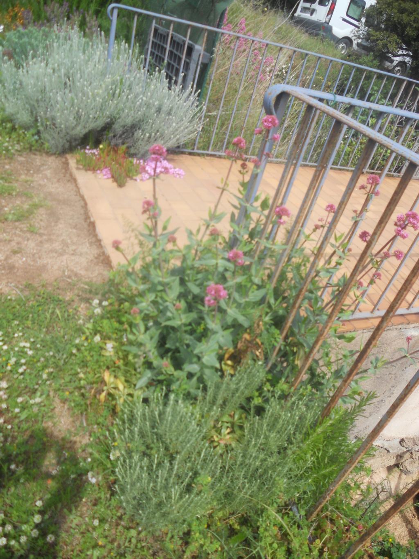 petite sortie au jardin - Page 2 Dscn0062