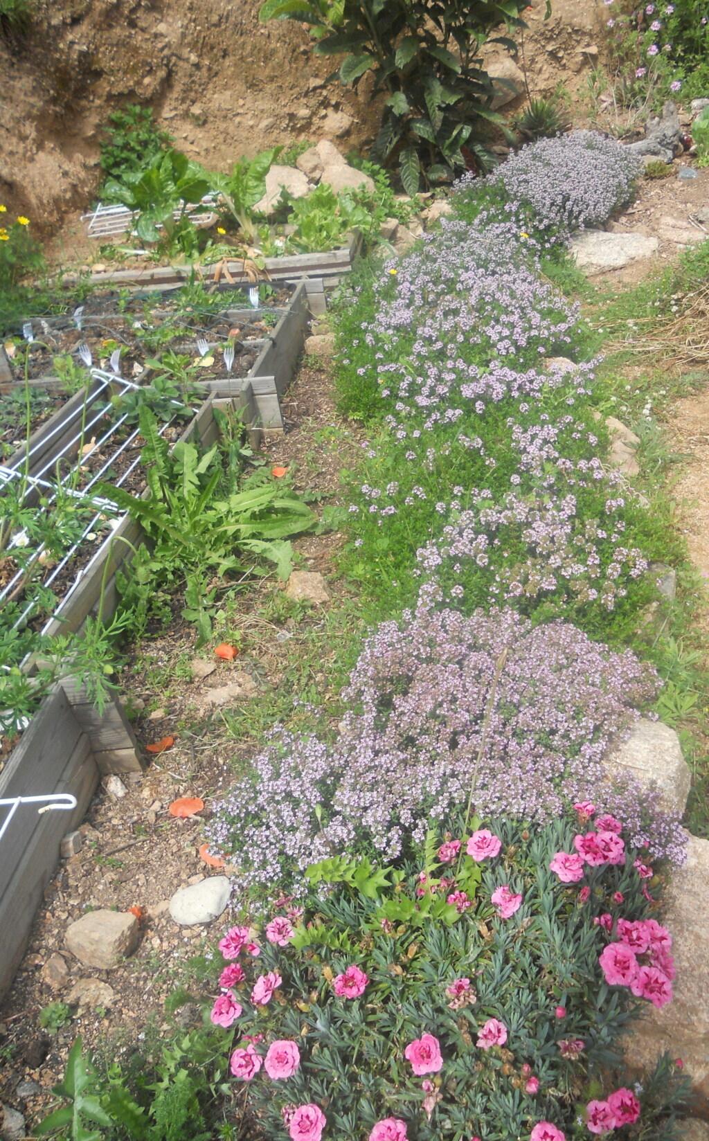 petite sortie au jardin - Page 2 Dscn0068