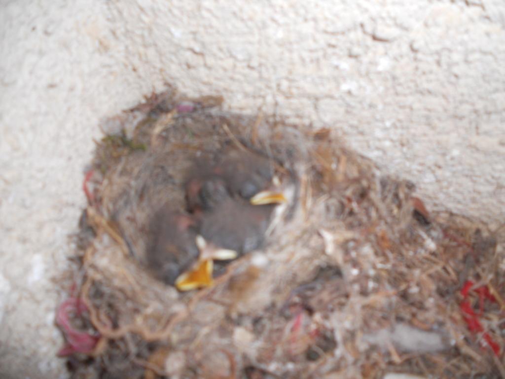 nid au dessus de mon compteur - Page 2 Dscn0424