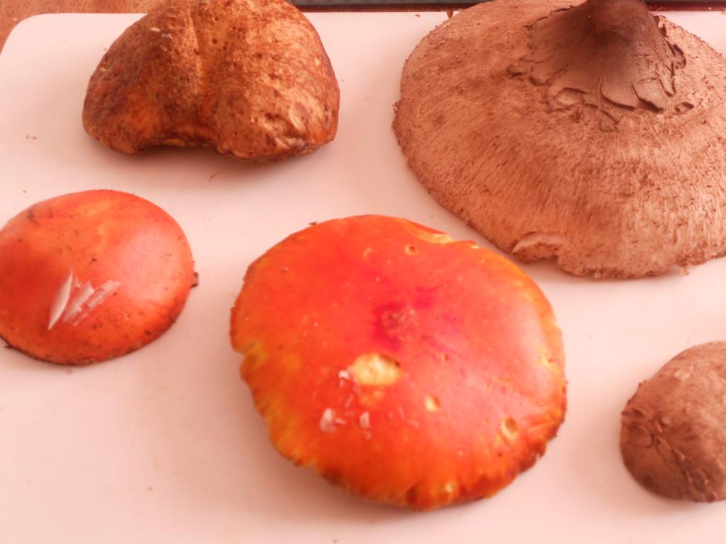 champignons Dscn0628