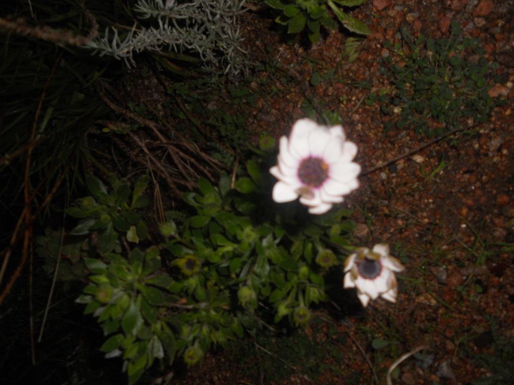 petite sortie au jardin Dscn1213