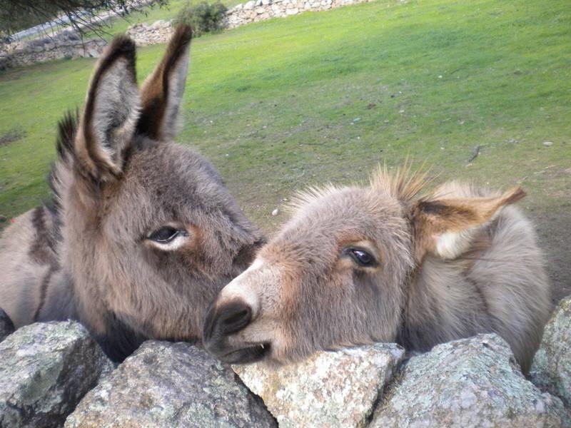 Thème du mois de Juillet 2019 : Nos animaux de compagnie... Dscn4020